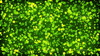 Green%20particles%2004.  thumbnail