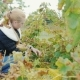 Young Woman Working in the Vineyard - VideoHive Item for Sale