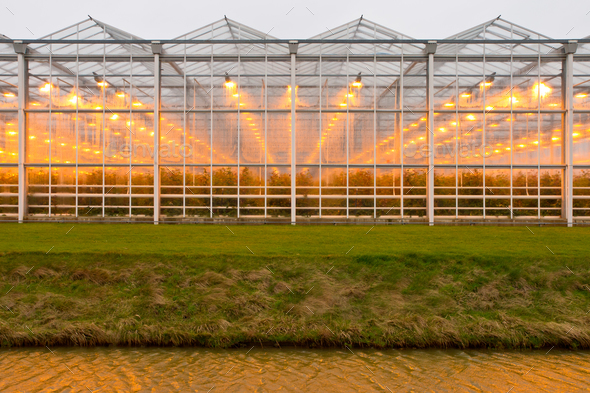 background commercial greenhouse - Stock Photo - Images