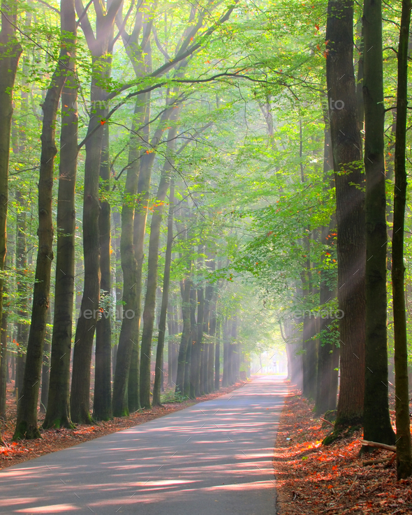 Brightly lit forest lane - Stock Photo - Images