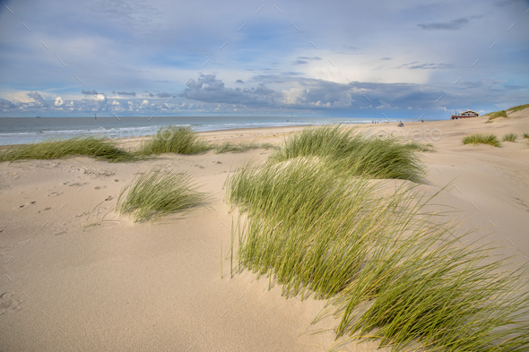 Young Dunes by the ocean - Stock Photo - Images