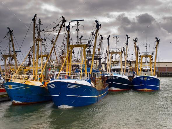 modern fishing fleet - Stock Photo - Images
