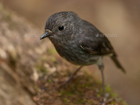 cute grey bird - Stock Photo - Images