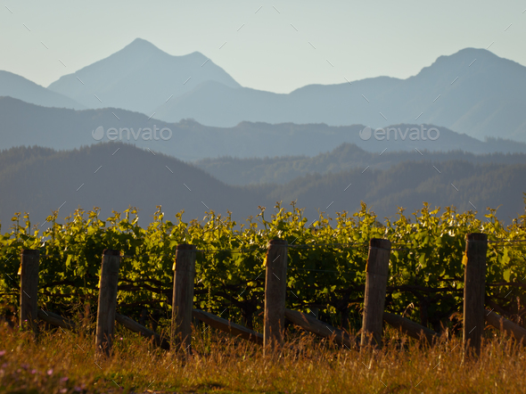 Vinyard mountain backdrop - Stock Photo - Images