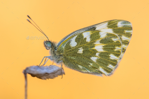 Butterfly Bath white orange background - Stock Photo - Images