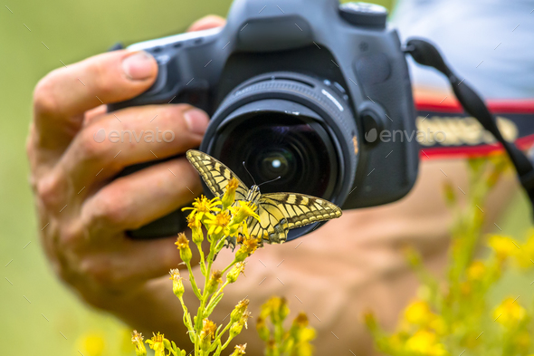 Butterfly photography - Stock Photo - Images