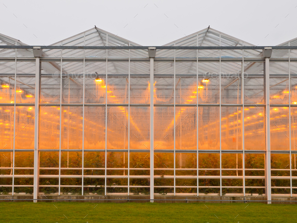 commercial glasshouse - Stock Photo - Images