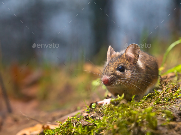 mouse with lots of copy space - Stock Photo - Images