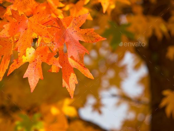 Autumnal foliage - Stock Photo - Images