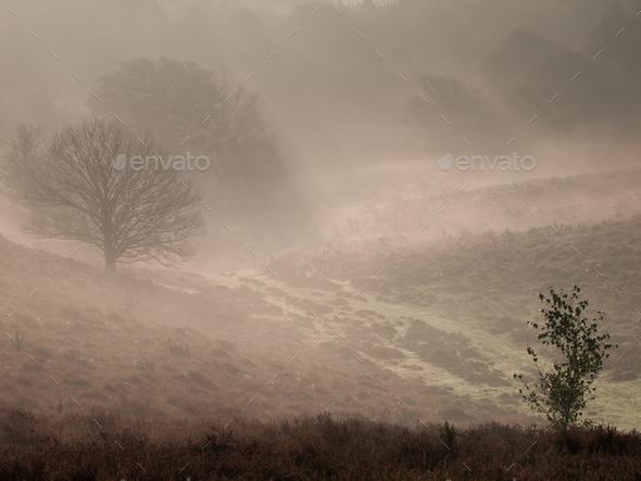 Fairytale landscape - Stock Photo - Images