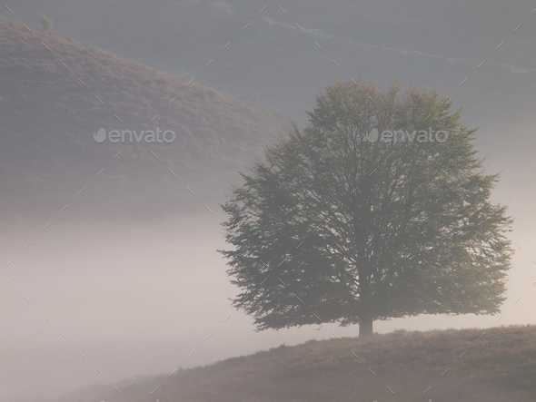 Tree silhouette on hill - Stock Photo - Images