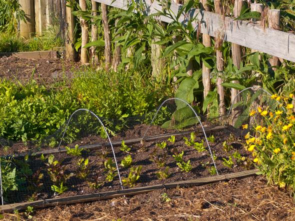 vegetable garden - Stock Photo - Images