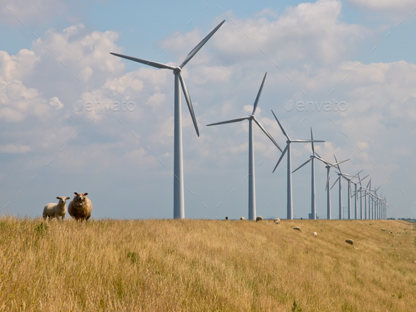 sheep in front of windturbines - Stock Photo - Images