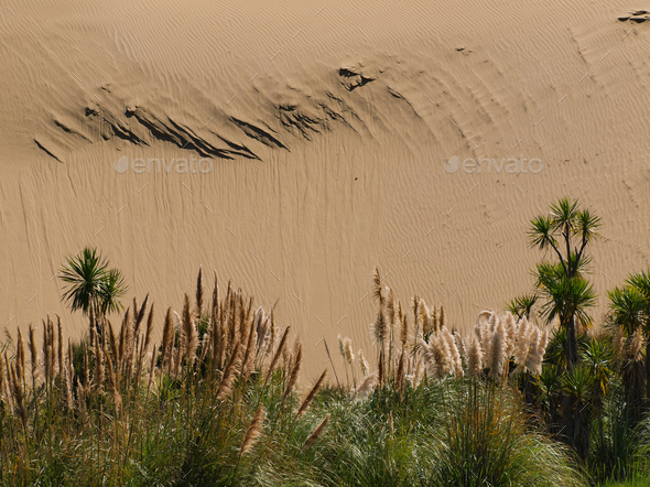 Sand dune background with lush vegetation - Stock Photo - Images