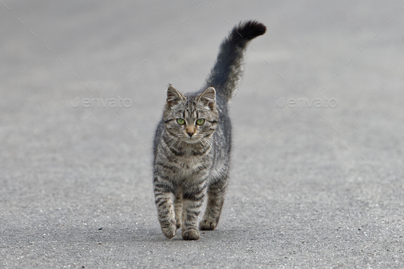 Portrait of shaggy cat on a asphalt road - Stock Photo - Images