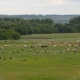 a Large Herd of Animals, Sheep, Cows, Horses, a Bird on a Green Spring Meadow - VideoHive Item for Sale