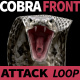 Cobra Front View Attack - VideoHive Item for Sale