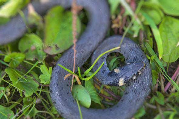 snake - Stock Photo - Images
