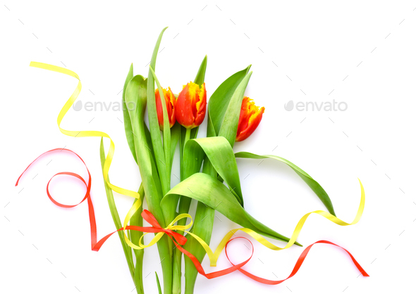 Tulips flowers on white background. Top view. - Stock Photo - Images