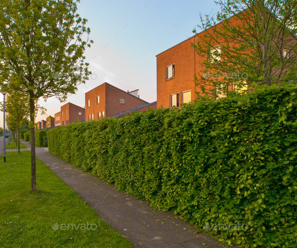 urban street with pavement and hedgerow - Stock Photo - Images