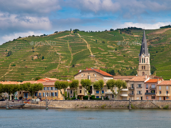 Vineyards in the Cote du Rhone France - Stock Photo - Images