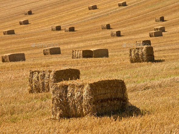 Straw bales background - Stock Photo - Images