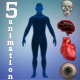 5 Human Anatomy - VideoHive Item for Sale