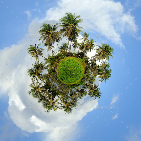 360 degree view of Palm tree - Stock Photo - Images