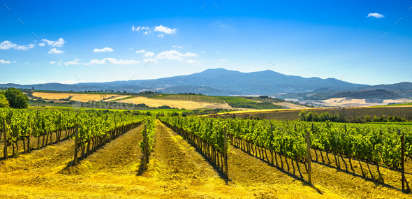 Vineyards, fields and Monte Amiata mountain. Tuscany, Italy - Stock Photo - Images