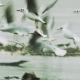 Black-Headed Gulls Taking Flight and Flying Away - VideoHive Item for Sale