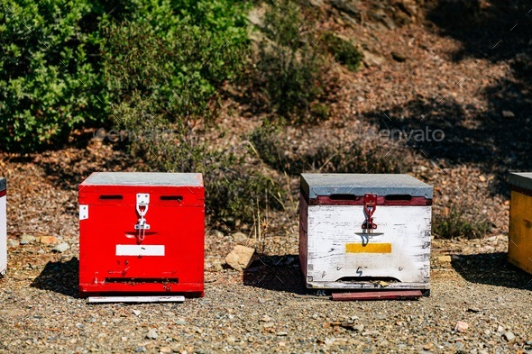 White and red wooden bee hives close-up in summertime - Stock Photo - Images