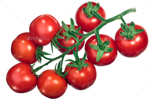 Cluster of tomatoes on the vine tov, top - Stock Photo - Images