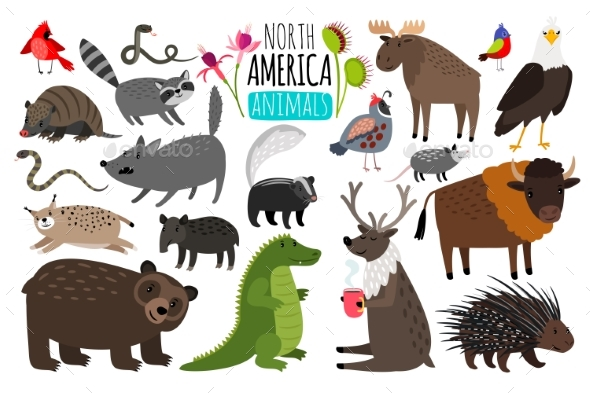 North American Animals - Animals Characters