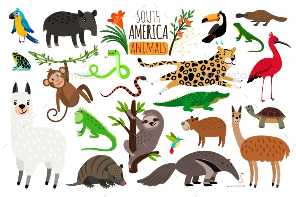 South America Animals - Animals Characters