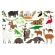 South America Animals - GraphicRiver Item for Sale