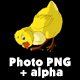 Yellow Chicken Walks and Pecks Alpha Matte - VideoHive Item for Sale
