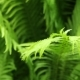 Fern - VideoHive Item for Sale