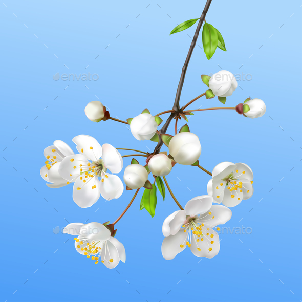 Spring Blooming Branch - Backgrounds Decorative