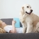 Care for Pets. Blonde Girl Is Reading a Book, Lying on the Couch with Her Dog in the Living Room - VideoHive Item for Sale