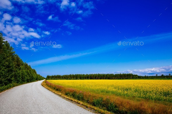 Countryside road along yellow rapeseed flower field and blue sky in rural Finland - Stock Photo - Images