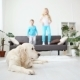 Brother and Sister Jumping on the Couch in the Living Room. the Golden Retriever Lies on the Floor - VideoHive Item for Sale