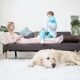 Life of Domestic Pets in the Family. Mother Reads the Book To the Children. the Golden Retriever - VideoHive Item for Sale