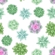 Seamless Pattern with Succulents - GraphicRiver Item for Sale