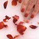 A Female Hand in Foam with Petals of Red Roses - VideoHive Item for Sale