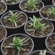 View of Flower Seedlings in Pots in the Greenhouse - VideoHive Item for Sale