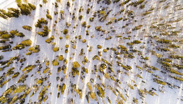 Aerial view of snow covered trees in the park - Stock Photo - Images