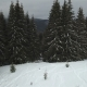Evergreen Spruces in Winter in a Mountainous Area - VideoHive Item for Sale