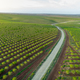 Aereal views of almond tree plantation in Alentejo, Portugal - PhotoDune Item for Sale