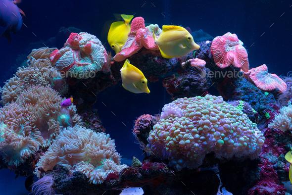 Bright fish swim in the aquarium - Stock Photo - Images