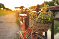 Beautiful bicycle with flowers in a basket stands on the street - PhotoDune Item for Sale